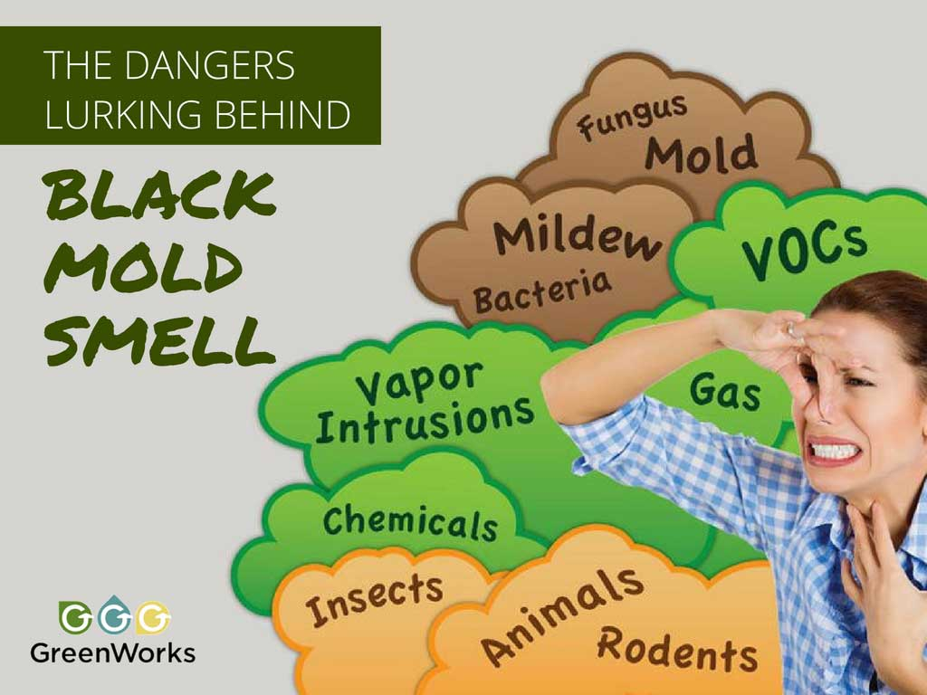 The Dangers Lurking Behind Black Mold Smell