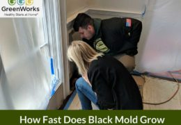 How Fast Does Black Mold Grow